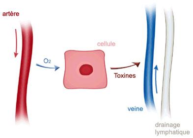 mécanisme d'un ulcère de jambe