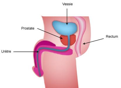 prostate-legende