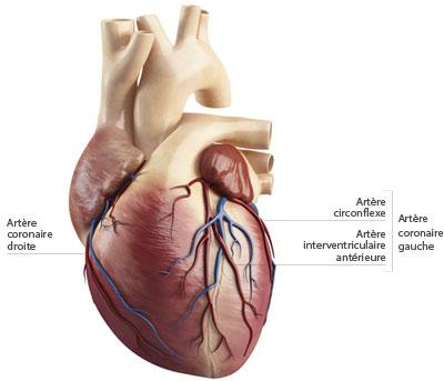 u coronaire artériel