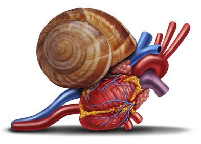 Escargot symbolisant l'insuffisance cardiaque