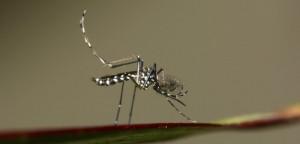 Virus Zika, moustique tigre : quels pays éviter?