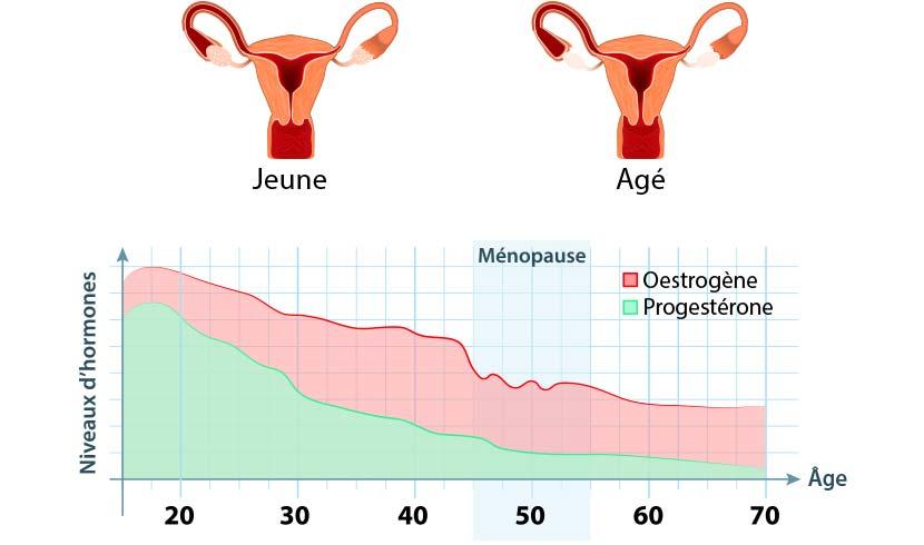 schéma ménopause