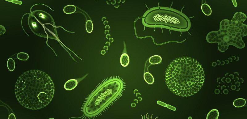 Corps_humain_Autant_de_bacteries_que_de_cellules