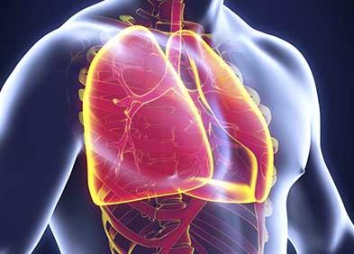 poumons humain