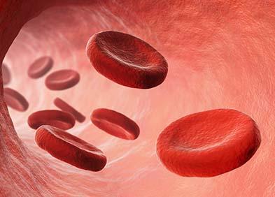 globules rouges