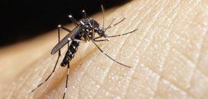 Quelle prévention efficace contre les moustiques ?