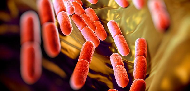 Des probiotiques contre les eczémas et les allergies ?