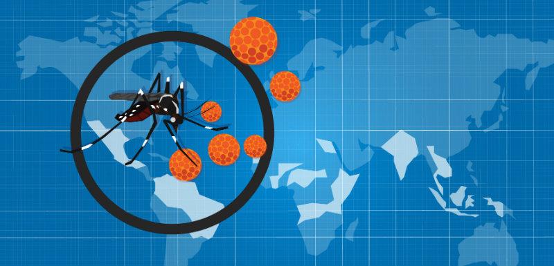 Virus Zika : bientôt un vaccin chez l'homme ?