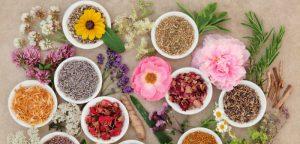 Les plantes médicinales contre l'urticaire