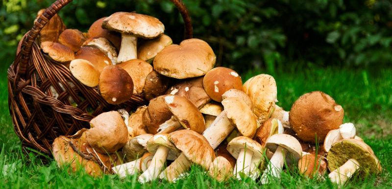 Trucs et astuces pour éviter l'intoxication aux champignons