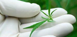 Un dérivé du cannabis contre l'épilepsie ?
