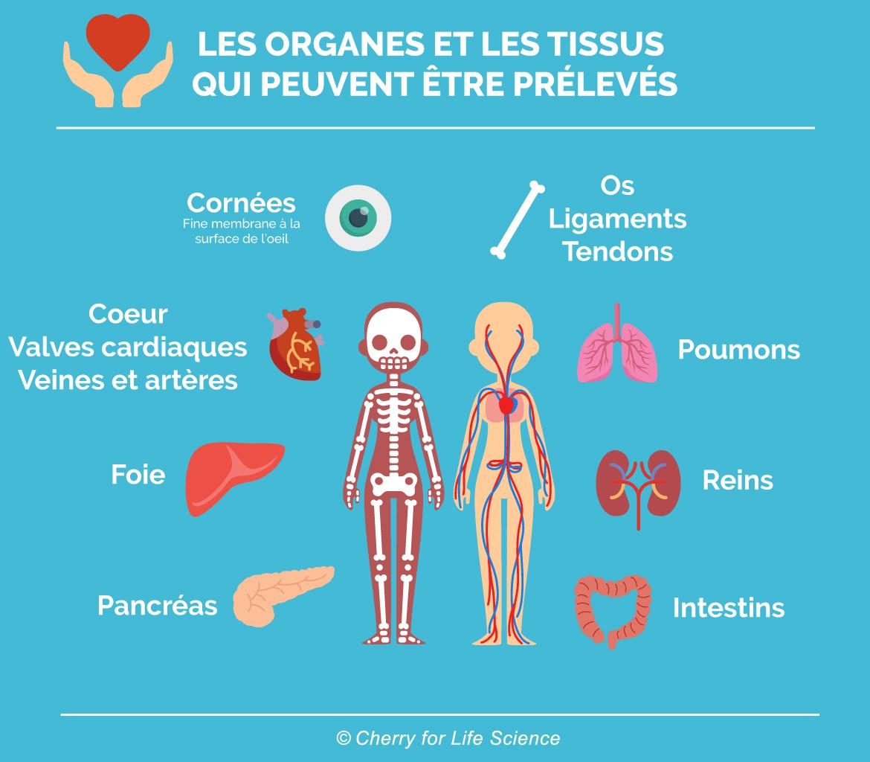Les organes et les tissus qui peuvent être prélevés