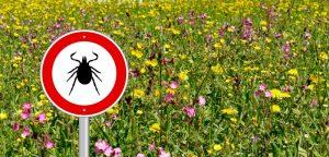 Mobilisation autour de la maladie de Lyme