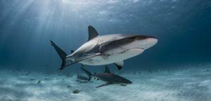 Le requin à l'attaque de la maladie de Parkinson