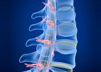 Radiographie de la colonne vertébrale