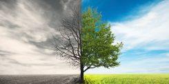 La fin de vie : Osez en parler !