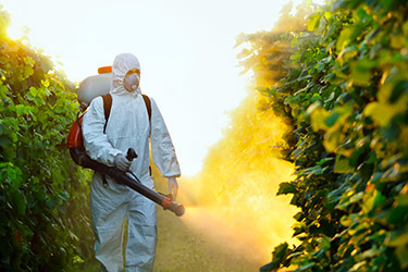 pesticides vigne