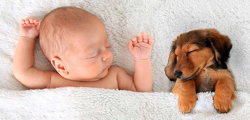 chiens chats contre allergie