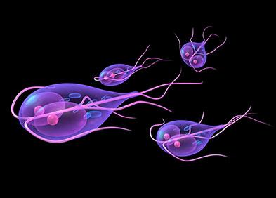 Parasites responsables de la giardiase
