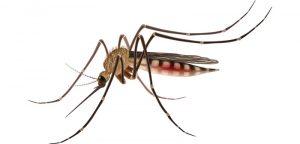Le paludisme, une maladie à éradiquer  !