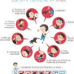 Infographie : les symptômes de la rage