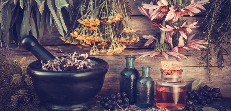 plantes antidiabétiques