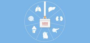 Don d'organes : parlons-en !