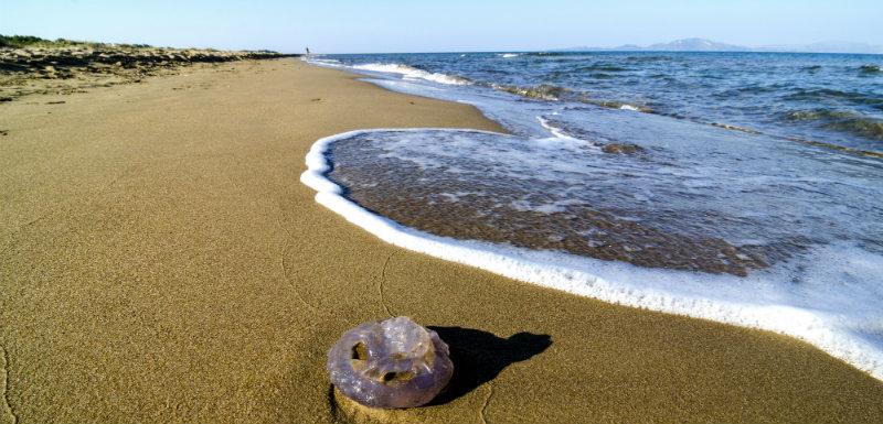 dangers plage-poissons de mer-démangeaisons-animaux marins-brulures