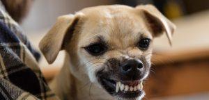 Morsures de chien : les enfants en première ligne