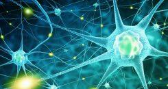 La maladie de Parkinson : auto-immune ?