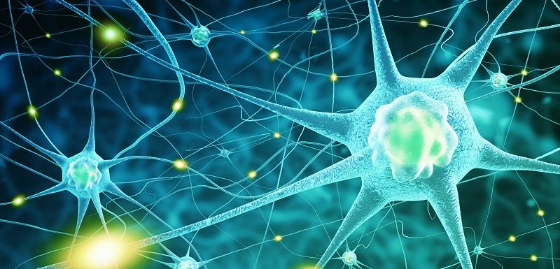 Maladie de Creutzfeldt-Jakob : définition et symptômes - Santé sur ...