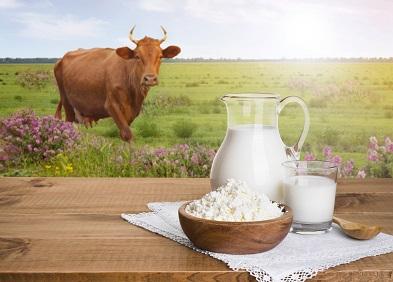 Allergie aux protéines de lait de vache