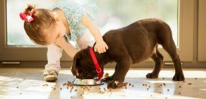 Les bienfaits des animaux de compagnie démentis par une nouvelle étude