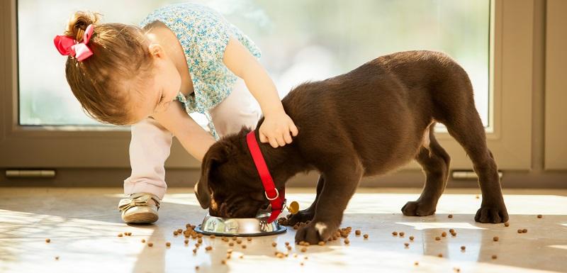 enfants et animaux de compagnie