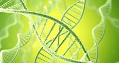 Maladies inflammatoires à l'âge adulte : le génome se souvient  !