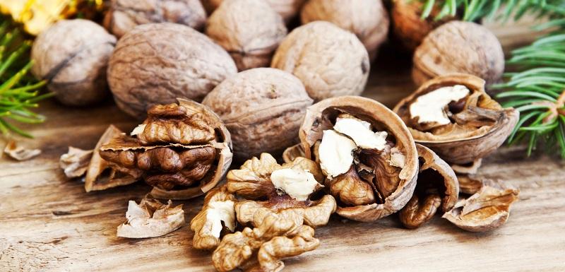 Relation entre les noix et l'activité cérébrale