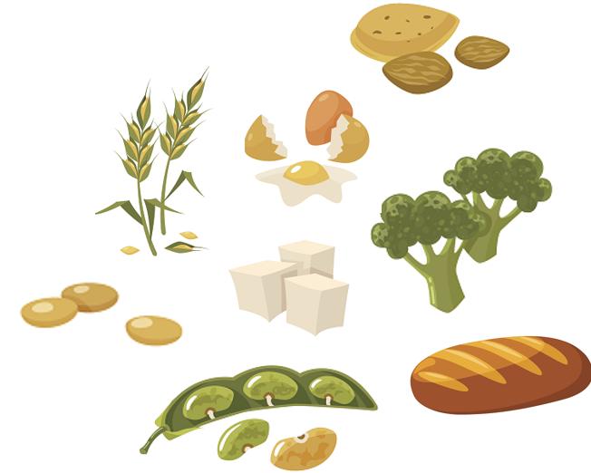 proteines-vegetales-menopause
