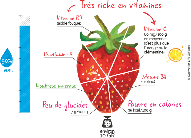 composition fraise fisétine