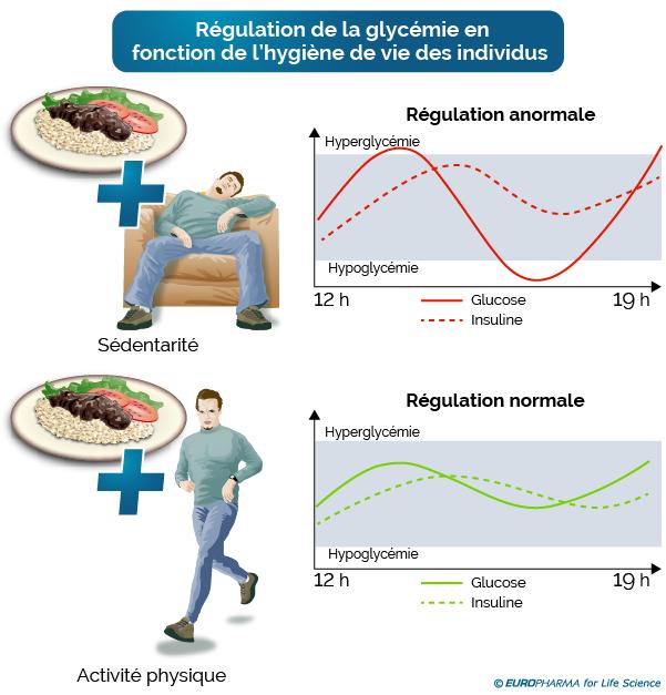 Représentation schématique de la régulation de la glycémie selon l'hygiène de vie des individus