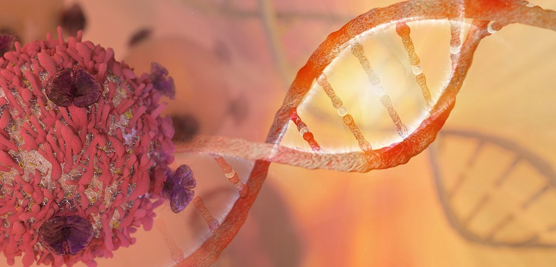 mise en cause du gène sestrine 1 dans le développement du lymphome folliculaire