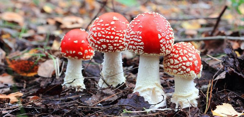 connaître les intoxications liées aux champignons grâce à un nouveau mooc accessible en ligne et gratuit