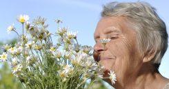 Perte de l'odorat et maladie d'Alzheimer