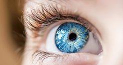 Dyslexie :  la faute à l'anatomie des yeux ?