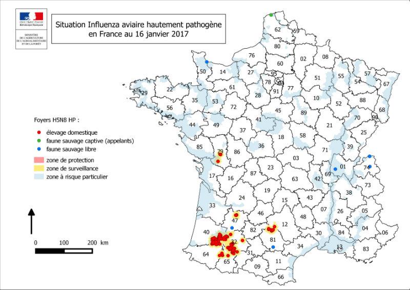 La France touchée par la grippe aviaire