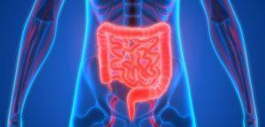 Où en sont les recherches sur l'infarctus de l'intestin ?