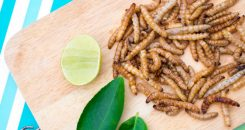 Des insectes dans nos assiettes !