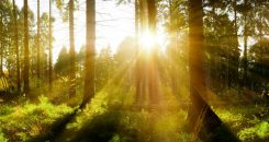 La lumière verte contre les douleurs chroniques