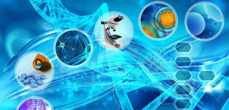 Différenciation cellules souches en cellules productrices d'insuline