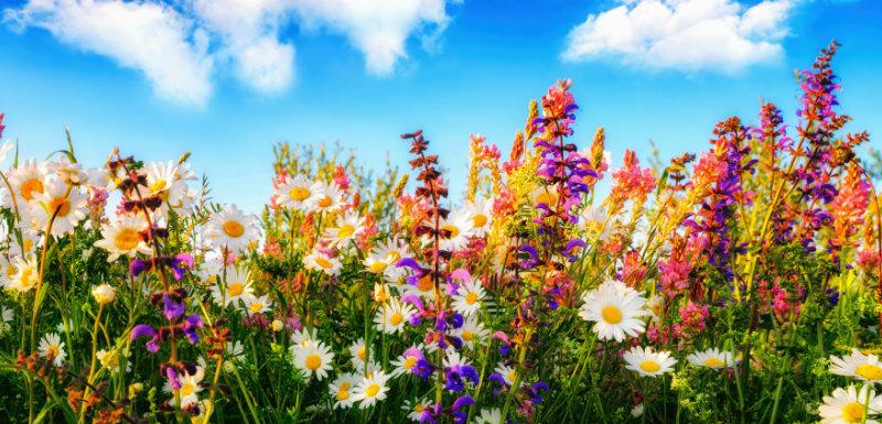 focus fleurs de bach