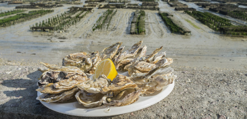 Huîtres - bienfaits - santé